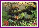 Perdidos en la selva